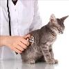 Ветеринарные клиники в Благовещенске